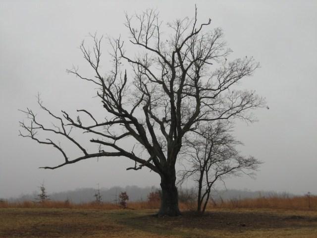 Devil's Tree