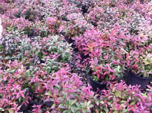 These are some of our favorite plantings