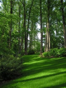 Lawn care for new lawns