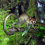 Tidligste primat rekonstrueret