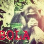 Ebola: En trussel mod menneskeaberne