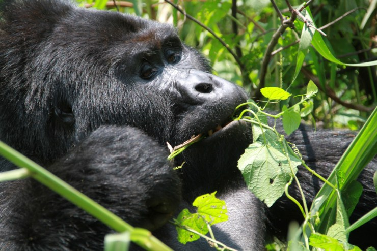 Foto: Michael O. Jørgensen, Bio/Zoo Information