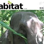 Habitat #21