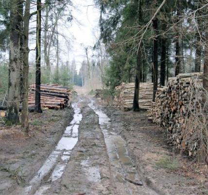 Leidimų kirsti mišką išdavimo tvarka