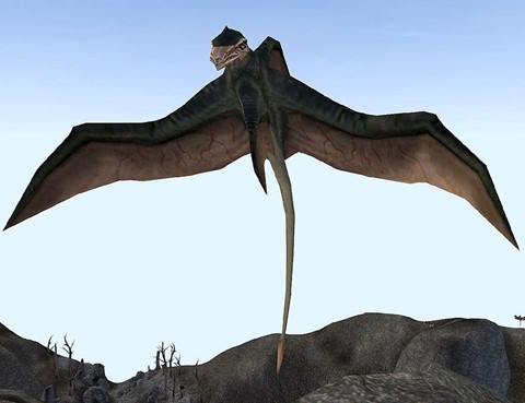 Morrowind Cliff Racer