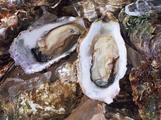 宮城の牡蠣