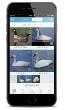 山溪ハンディ図鑑 日本の野鳥