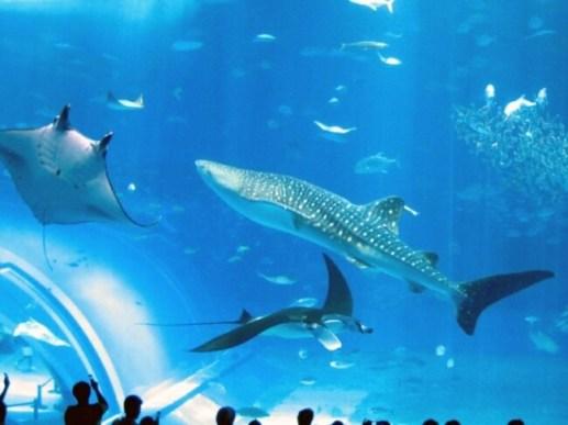 世界的に高評価を得た「沖縄美ら海水族館」