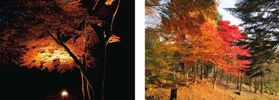 紅葉ライトアップ(イメージ) / 園内の紅葉