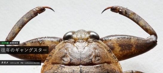 虫顔図鑑~身近なカイブツたち - タガメ