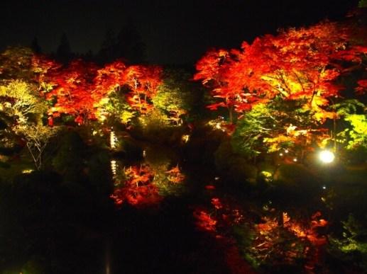 逍遥園の庭木