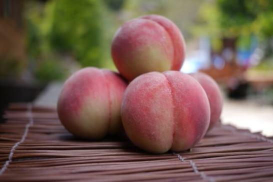 福島を代表する夏のフルーツ「桃」