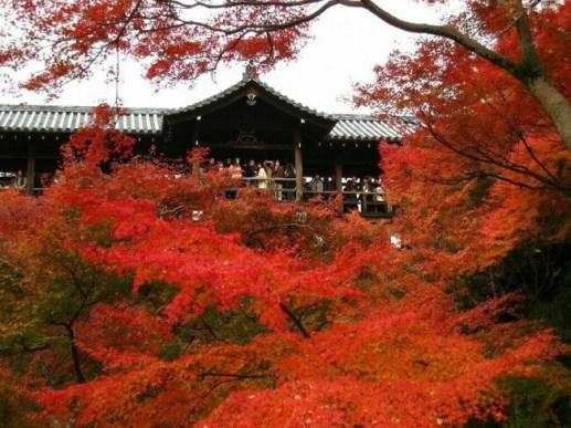 紅葉名所ランキング - 3位:東福寺(京都府京都市)