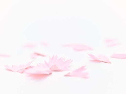 花色鉛筆 - TRINUS