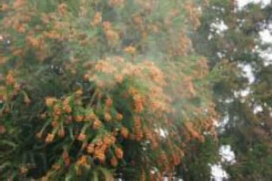 花粉症シーズン間近!2017年西日本で飛散数が前年の2倍!
