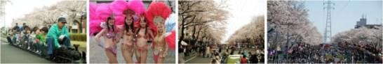 六実(むつみ)桜まつり