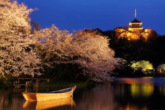 三溪園 観桜の夕べ