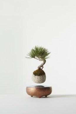 セット内の軽石に盆栽を植付けたイメージ