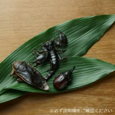 「TAKEO」の昆虫食の販売を開始 ‐ Village Vanguard Webbed