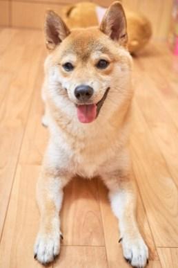飼い犬の種類について