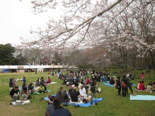 《佐倉城址のさくら》期間中は、桜を眺めながらピクニック気分で!