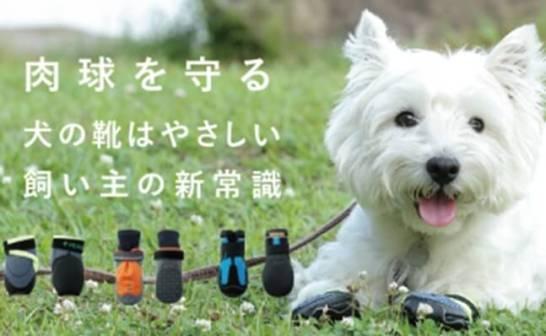 愛犬と一緒に楽しむアウトドア