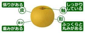 参照:果物情報サイト『果物ナビ』より