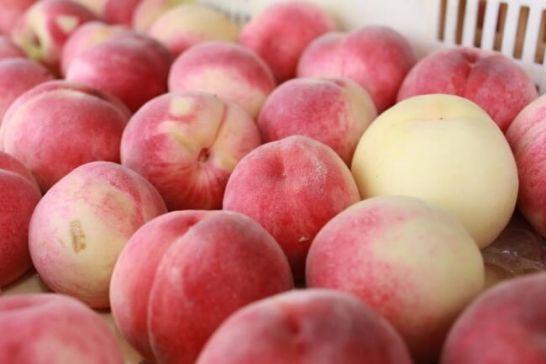 サンクトガーレン、山梨のはねだし桃を活用したクラフトビール「7種の桃のエール」を9月5日より発売