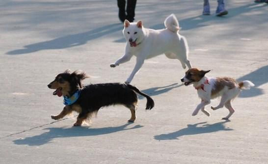 一日限定のドッグランが公園内に登場!愛犬を連れて楽しめるイベント(西東京いこいの森公園)