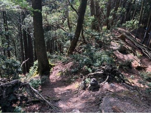雨乞岳の沢谷ノ頭〜登山口(関西 / 滋賀・三重の県境)