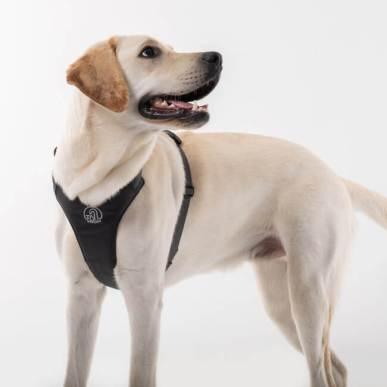 世界初の機能を搭載した、犬用伸縮リード一体型ハーネスがテールハイ(TAILHIGH)から発売!愛犬とのお出かけを今よりもっと快適にします。