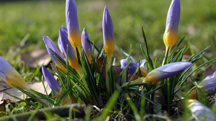 We wtorek zaczyna się astronomiczna wiosna