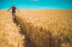 Cómo construir un sitio web para tu negocio agrícola o ganadero
