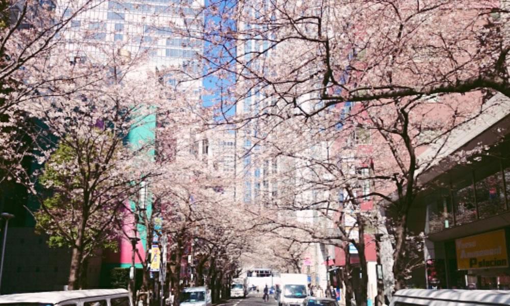 幻想的な夜桜ライトアップ、駅近で魅力的なお店が立ち並ぶスポットで。