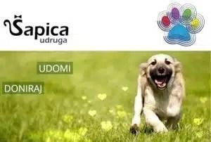 Sapica