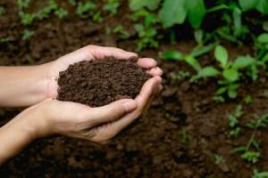 Kje kupiti kompost