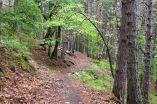 Tracks Cerdanya ENDURO 39