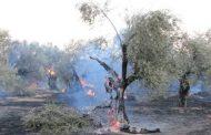 ΤΩΡΑ: Φωτιά στην Μάνη!