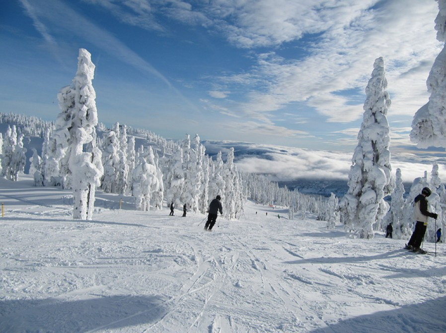people skiing in winter