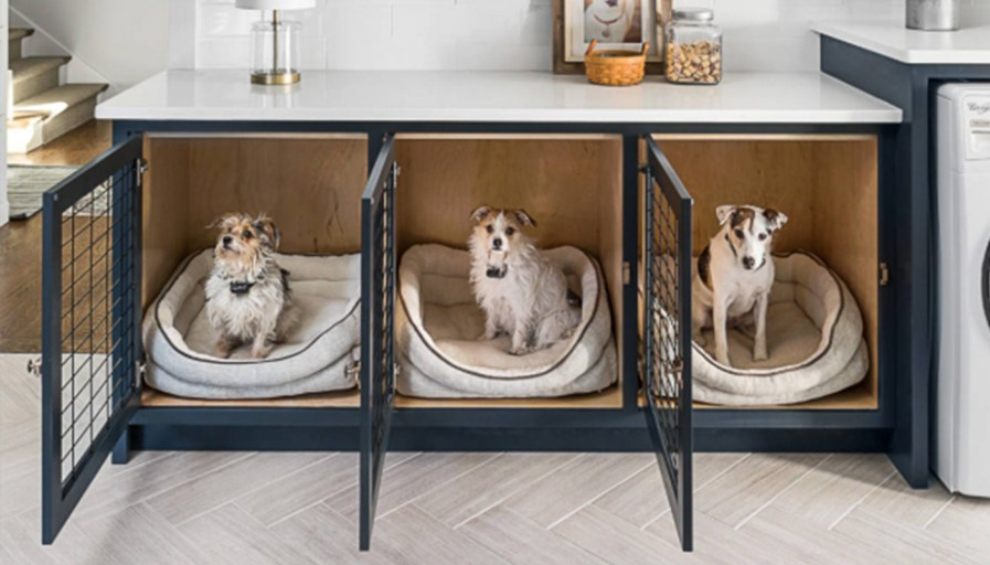 three dogs in their beds