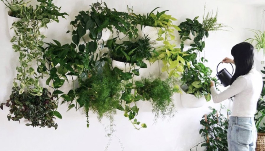a woman watering the plants she has hanging on the wall