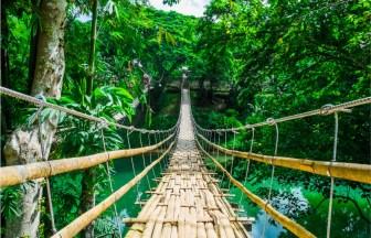 greenery-path