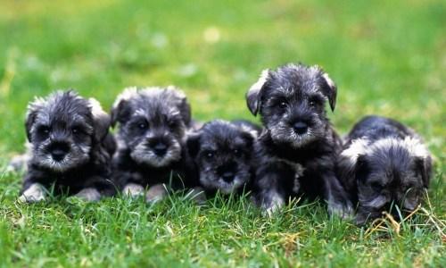 仔犬に学ぶ、不動産売却の極意とは?