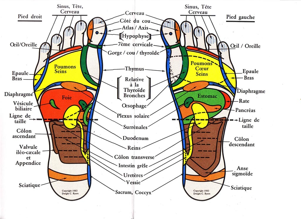 And Chart Feet Reflexology Hands