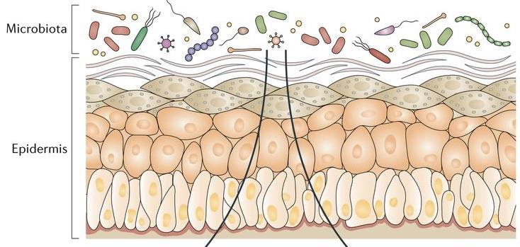 mikrobióm kože