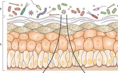 Kožný mikrobióm