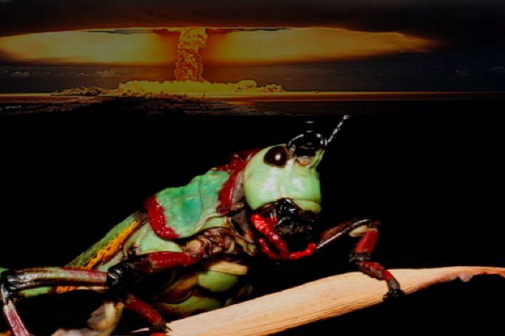 joel-locust