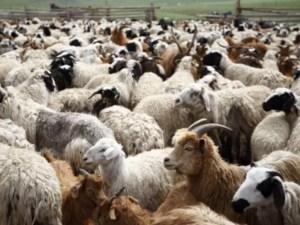 ¿Una nueva explicación de la parábola de las ovejas y las cabras?