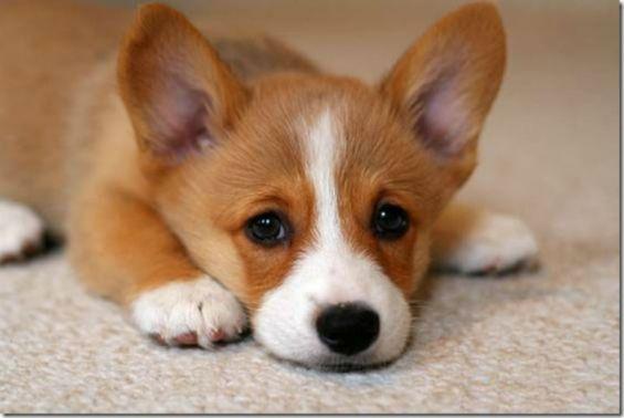 Sad-Dog-Pictures-8