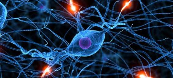 brain-memory-neurons-670-1